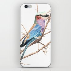 Lilac breasted roller iPhone & iPod Skin