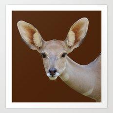 Lesser  Kudu female Art Print