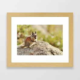 Yosemite Chipmunk Framed Art Print