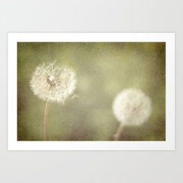 Sweet Dandelions  Art Print