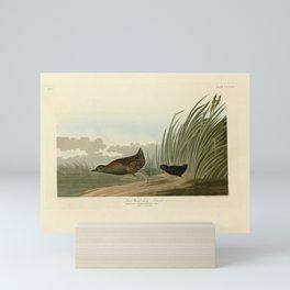 349 Least Water-hen17 Mini Art Print