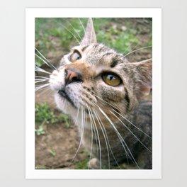 Farm Cat Art Print