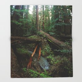 Humboldt Redwoods State Park Throw Blanket