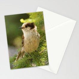 Profile of a Grey Jay / Whiskeyjack Stationery Cards