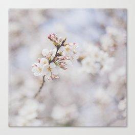 . delicate blossom . Canvas Print