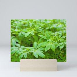 Flower seedlings Mini Art Print