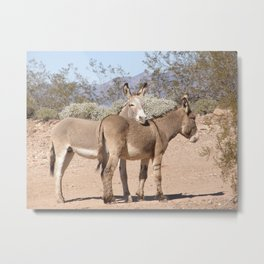 Wild Burros Metal Print