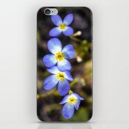 Four tiny bluet flowers iPhone Skin