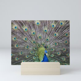 Pretty as a Peacock Mini Art Print