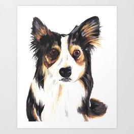 Kelpie Dog Art Print
