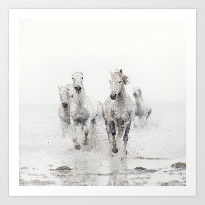 Camargue White Horses Running in Water - Nature Photography Kunstdrucke