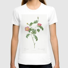 Rosa Indica (1817-1824) by Pierre-Joseph Redoute and Henry Joseph Redoute T-shirt