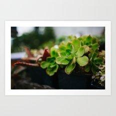 Succulent Rain Drop Art Print