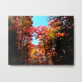 Fall Forest Delight Metal Print