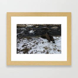 beautiful Goose showing off. Framed Art Print