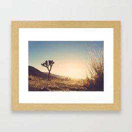 Joshua Tree Sunset Framed Art Print