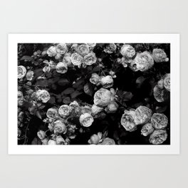 Roses are black and white Art Print