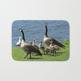 Canada Geese on Grass by Water Bath Mat