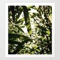 bamboo view by erinmichellechalfant