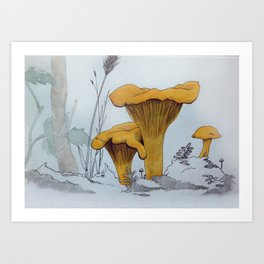 Chanterelles Art Print