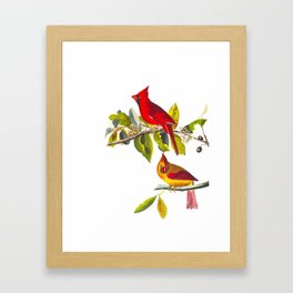 Cardinal Vintage Bird Illustration Framed Art Print