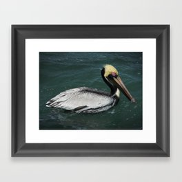 Pelican Pete Framed Art Print