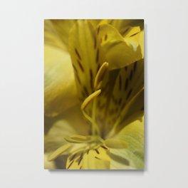 Flower Yellow Stamens Vertical Metal Print