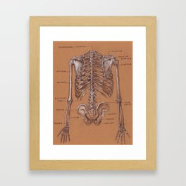 Jesse Young's Human Anatomy Drawing of Skeletal Structure of the Torso (Circa 2005) Framed Art Print