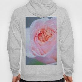 Forever in Love - Pink Rose #1 #decor #art #society6 Hoody