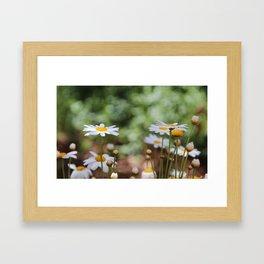 Summertime Daisies Framed Art Print