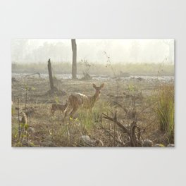 Chittel Deer and her fawn Canvas Print