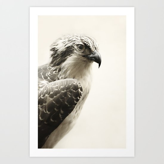 Hawk | Fig .03 Art Print