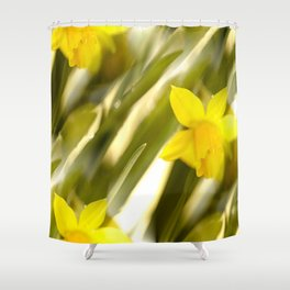 Spring atmosphere with yellow narcissus Shower Curtain