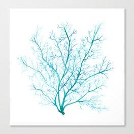 Blue sea fan coral Canvas Print