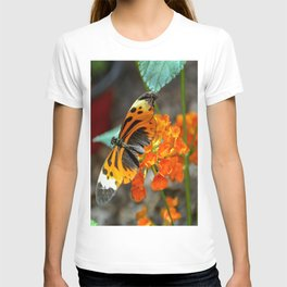 Numata Longwing Butterfly T-shirt