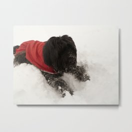 Briard in the Snow Metal Print