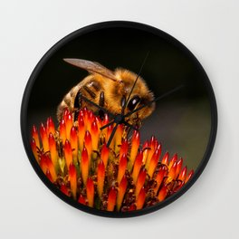 Honeybee on the Echinacea Wall Clock