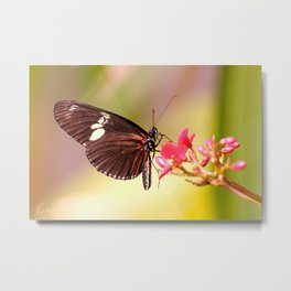 Rainbow Butterfly Metal Print