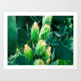 Close Up Of Blooming Green Cactus With Yellow Flowers Art Print