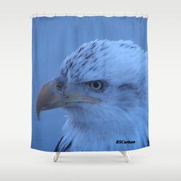 Young Eagle in Failing Light Shower Curtain
