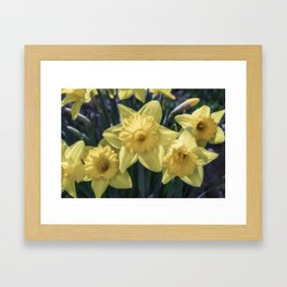 Spring time Daffodils Framed Art Print