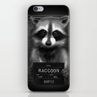 rocket raccoon iPhone & iPod Skins featuring Raccoon Mugshot by Company of Wolves