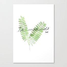 Tamarindo Leaf Canvas Print
