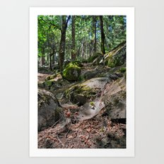 Forest and Webs Art Print