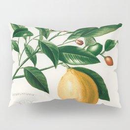 Vintage Lemon Illustration Pillow Sham
