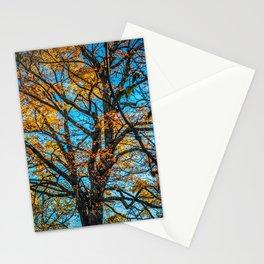 East Don Park Fall Season Trees Stationery Cards