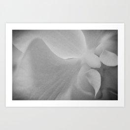 b/w Orchid, 2 Art Print