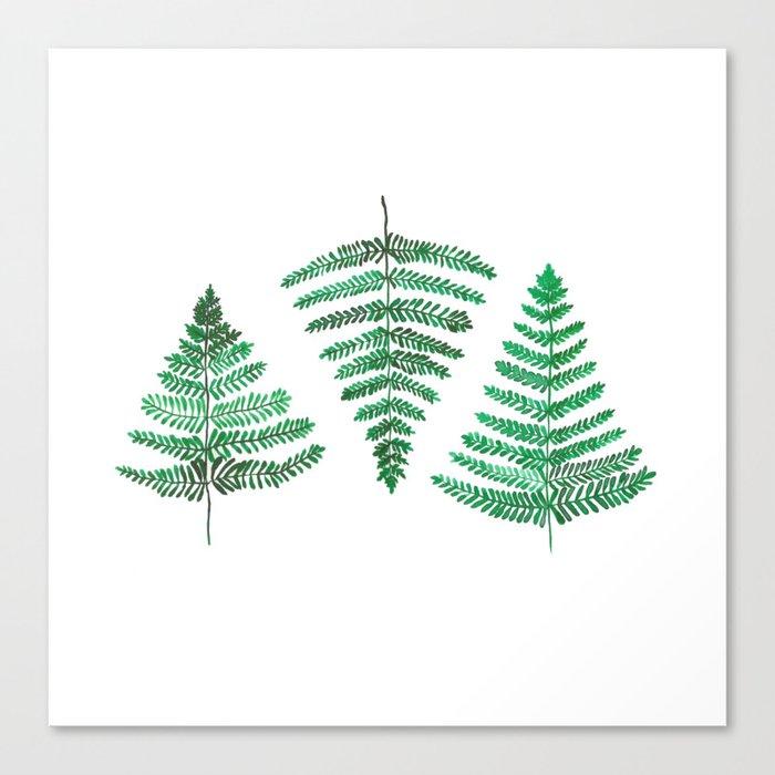 Fiordland Forest Ferns Canvas Print