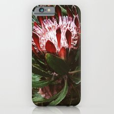 Protea and Raindrops  Slim Case iPhone 6s