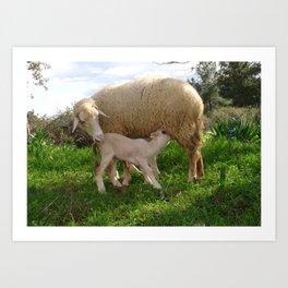 Lamb Suckling From An Ewe Art Print
